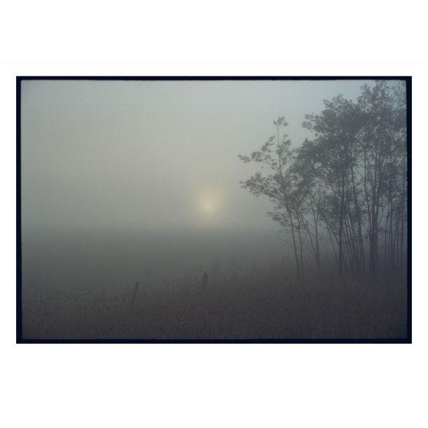 Tarago Misty Morning #1 by Damian Seagar