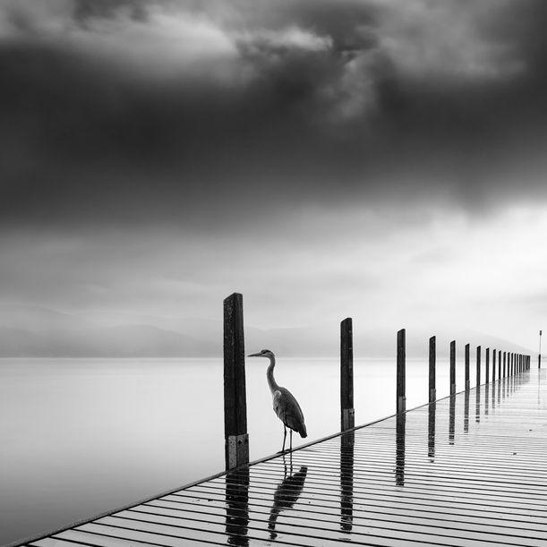 Rain Bird by George Digalakis
