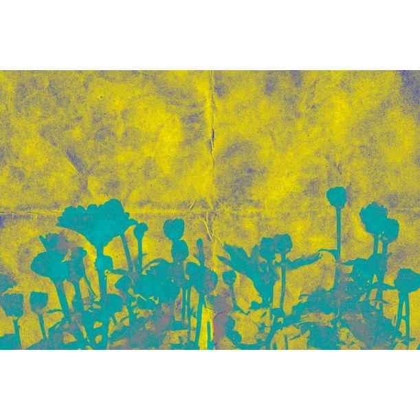 Euphoria botani Nº03 by Sumit Mehndiratta