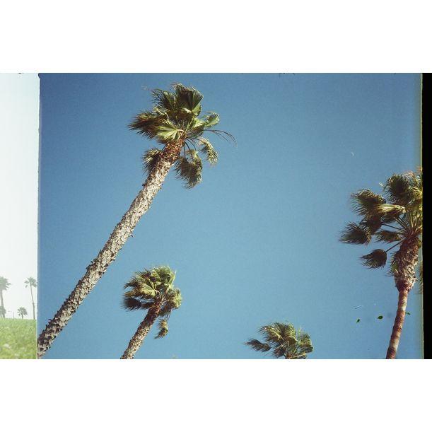 Los Angeles Palms II by gutterdust