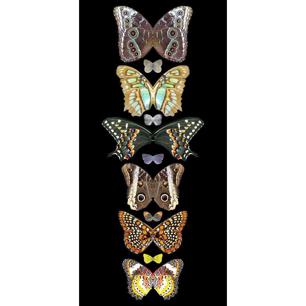 Metamorphosis 2 by Sumit Mehndiratta