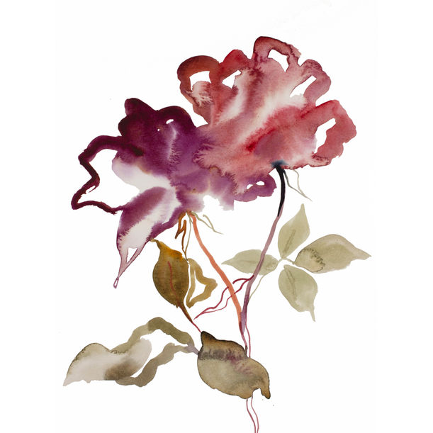 Rose Study No. 52 by Elizabeth Becker