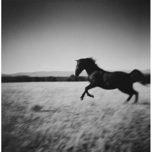 Ben's Morgan, New Mexico by Lara Porzak