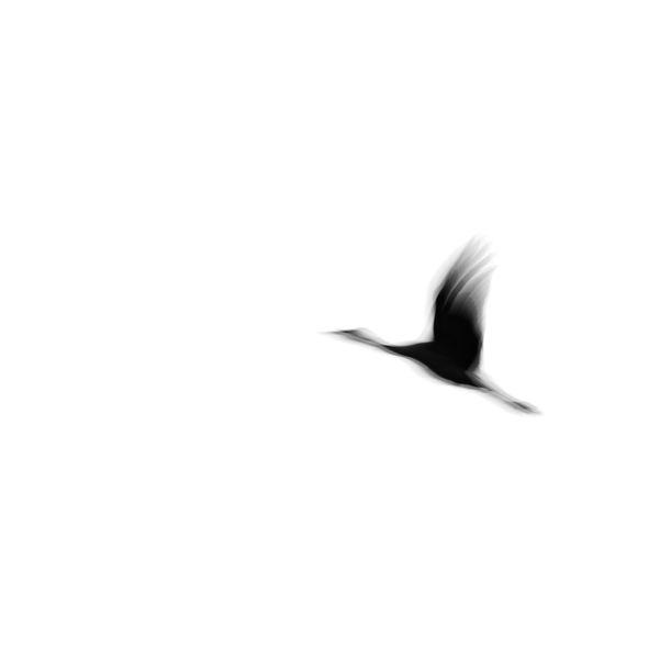 Crane(s) I by Tal Paz-Fridman