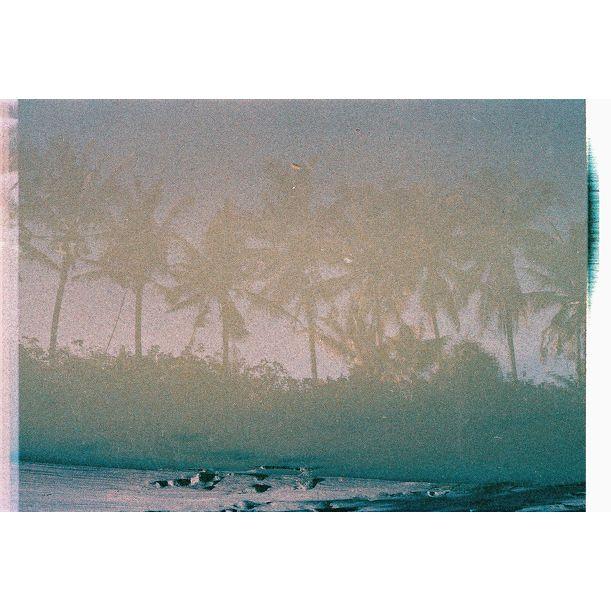 Moon Palms by gutterdust