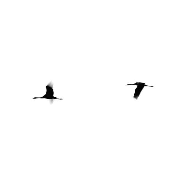 Crane(s) II by Tal Paz-Fridman