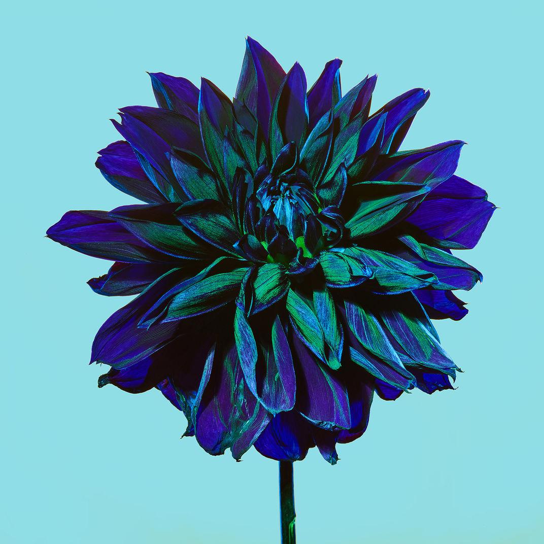 Blue and Green by Baldemar Fierro