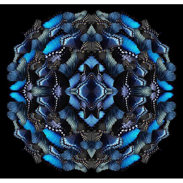 Midnight Morphosis by Sumit Mehndiratta