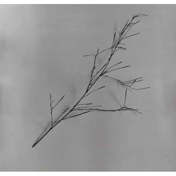 Whispers of Trees-Bamboo by Chu Chu