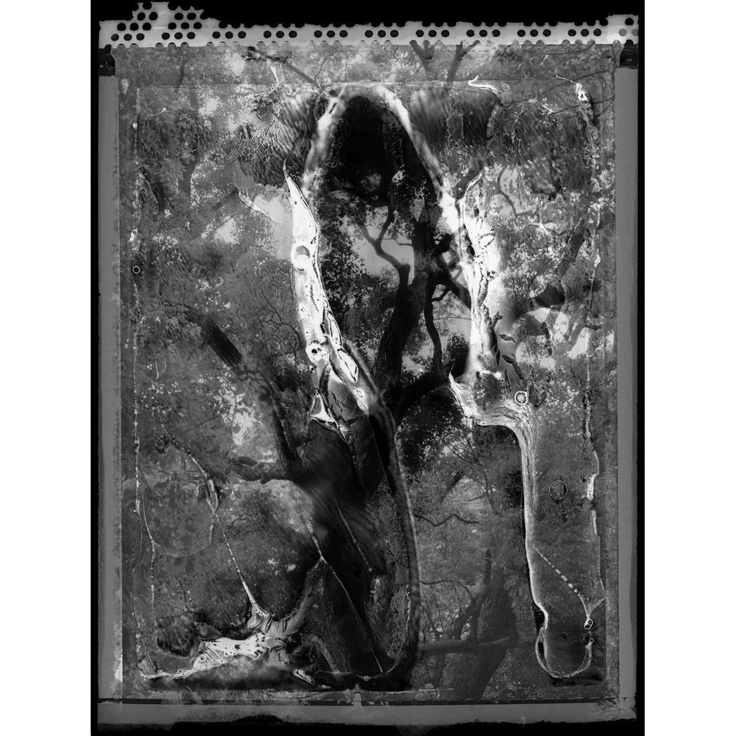 Spirit of Forest 08 by Yasuo Kiyonaga