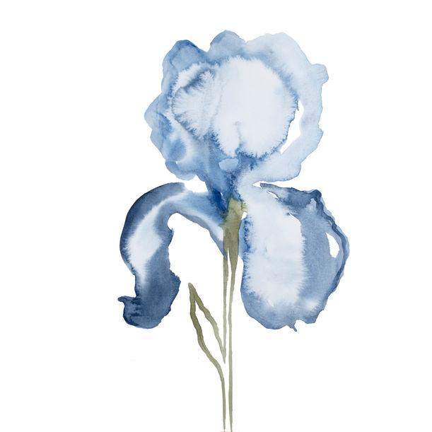 Iris No. 128 by Elizabeth Becker