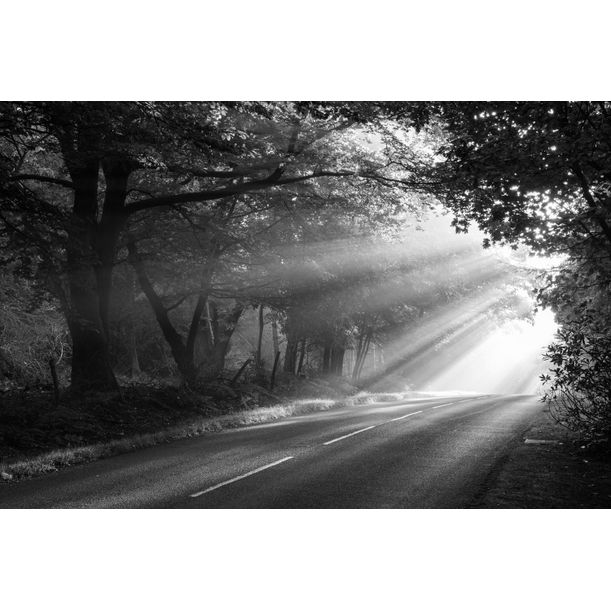Morning sun rays falling on forest road, Ashdown Forest, Sussex, England by James Warwick