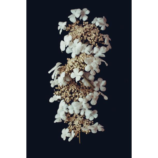White petals by Larisa Siverina