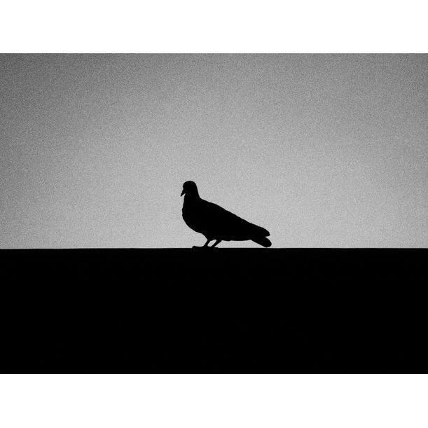 A BIRD by Tei Sinthip