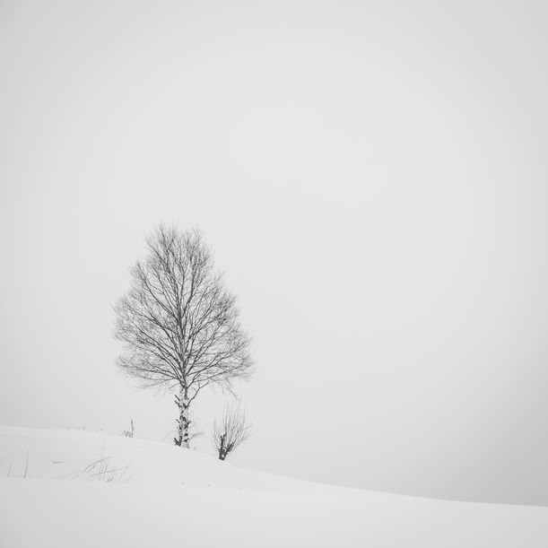 Snow Landscape from Biei 3 by Chinnaphong Mungsiri
