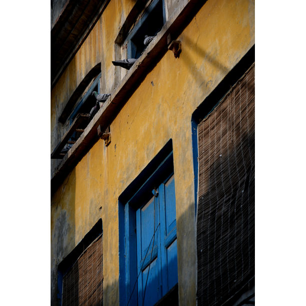 Yellows and Blues by Aneeq Haider