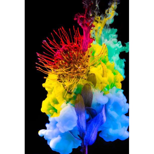 Chrysalis Spectrum by Javiera Estrada