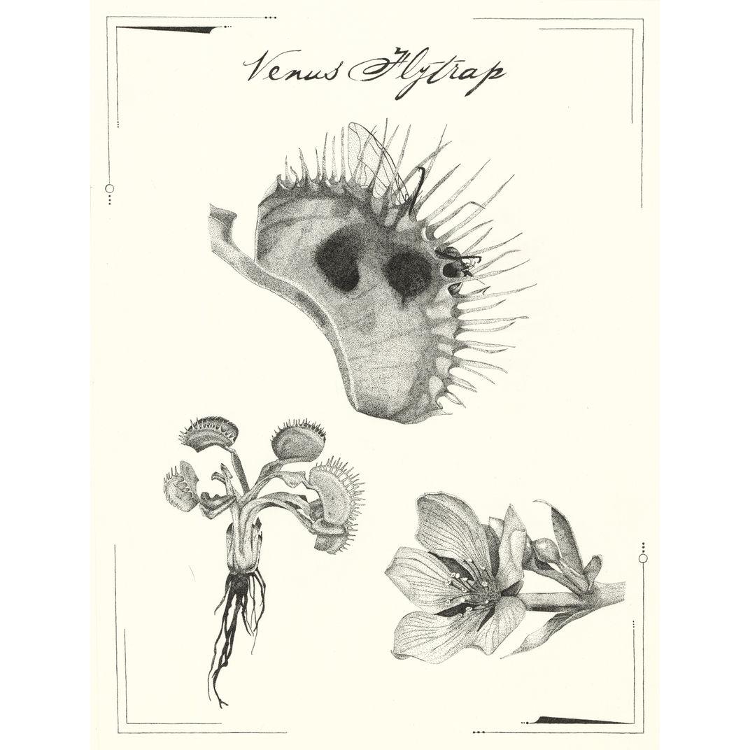 Venus flytrap by Victoria Demidova