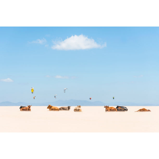COWS AND KITES by Andrew Lever