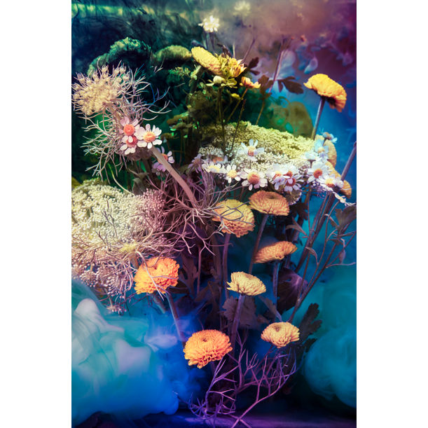 The LSD by Javiera Estrada
