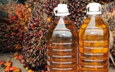 Minyak Kelapa Sawit/ Sumber: ugm.ac.id\n