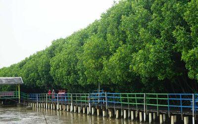 Desa wisata bahari mangrove/maritim.go.id\n
