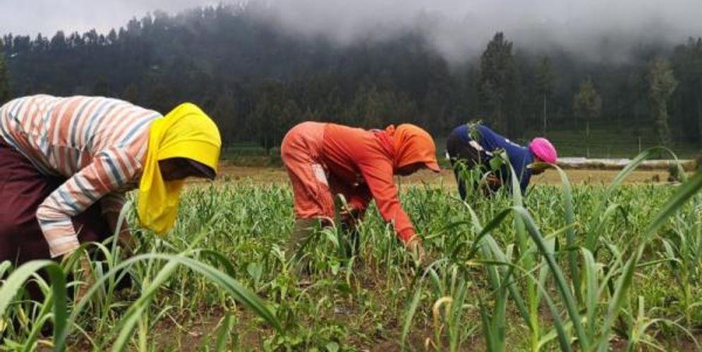Ilustrasi petani Indonesia. Sumber: jurnas.com\n