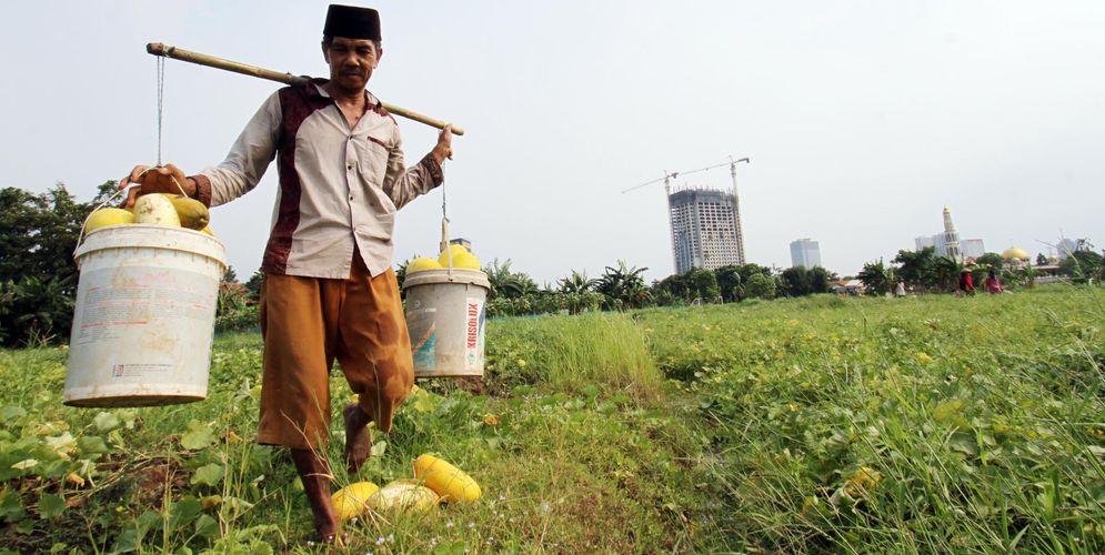 Nampak petani timun suri tengah memetik hasil kebunnya di kawasan Pinang Kota Tangerang , Selasa 20 April 2021. Foto : Panji Asmoro/TrenAsia\n
