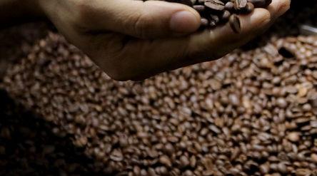 Pekerja menunjukkan varian biji kopi di Kedai Dunia Kopi, Pasar Santa, Jakarta Selatan, Selasa, 19 J...