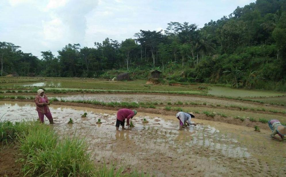 Pemerintah tengah merancang untuk mencetak ratusan ribu lahan sawah baru. / Facebook @kementanRI\n