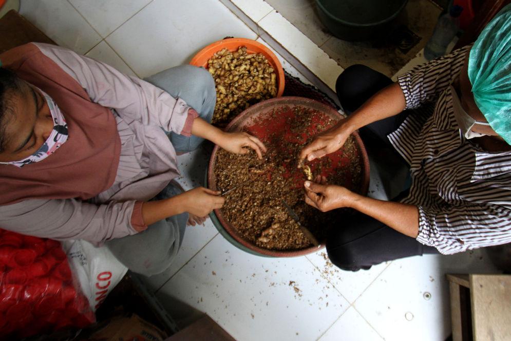 Pekerja menyelesaikan proses pembuatan produk olahan jahe di industri rumahan kawasan Bugel, Kota Tangerang, Banten, Jum'at, 2 Oktober 2020. Produk Usaha Mikro, Kecil, Menengah (UMKM) olahan jahe yang dijadikan sirup, serbuk dan permen jahe ini mendapatkan berkah ditengah pandemi, produksi dan penjualan meningkat tajam. Produk berbahan jahe menjadi tren dikalangan warga ditengah wabah corona. Warga mencari sirup olahan jahe untuk menjaga stamina  dan imunitas tubuh disaat pandemi Covid-19. Produk olahan jahe ditempat ini dijual dari harga Rp3 ribu hingga Rp35 ribu per buah. Foto : Panji Asmoro/TrenAsia\n