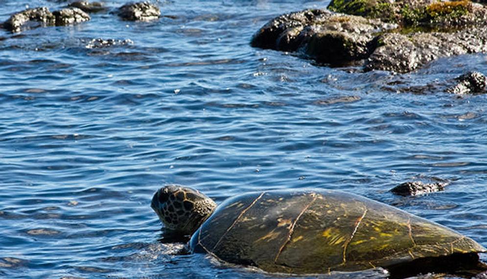 Pulau Kura-Kura/Foto: thebali.co.id\n