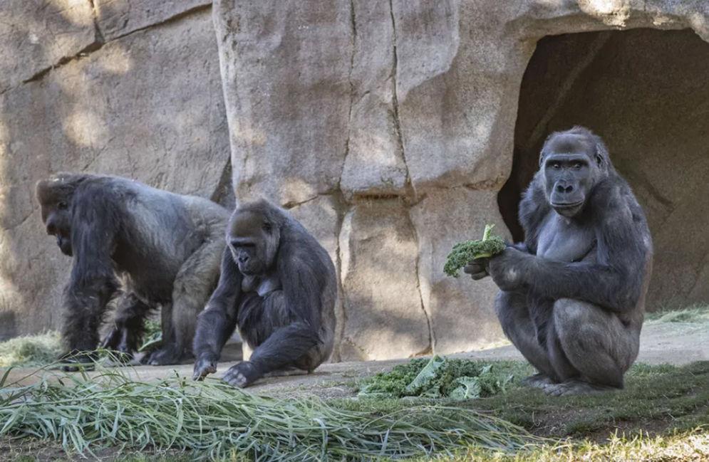 Foto: San Diego Zoo \n
