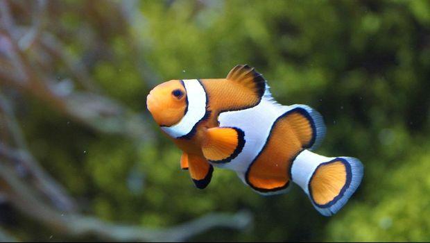 5 Rekomendasi Ikan Hias Cantik Yang Mudah Dipelihara