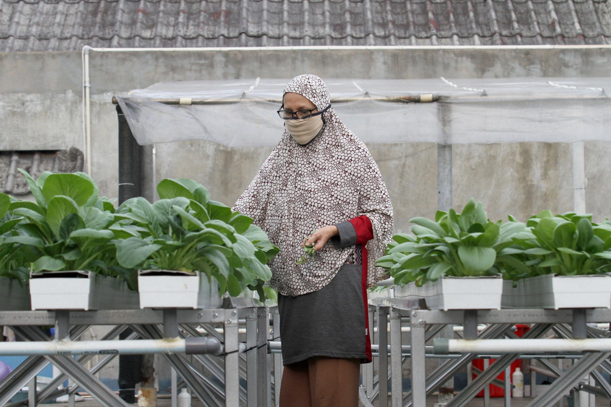 Berkebun Ramah Lingkungan A La Demfarm.id di Rumah