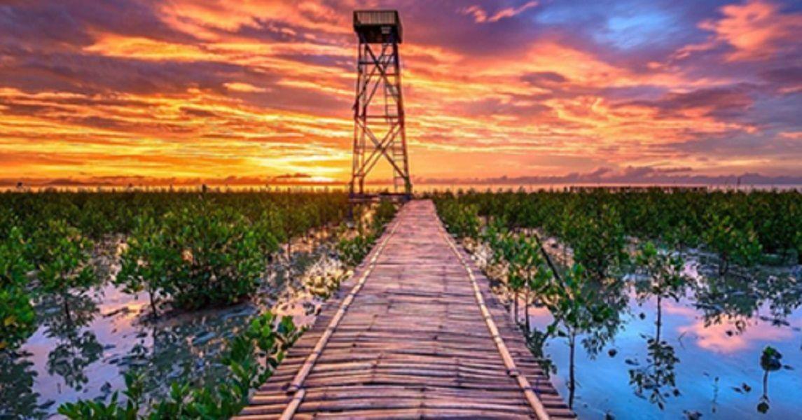 Setelah Kalbar, Ini 4 Lokasi Pembangunan PRPEP sebagai Destinasi Wisata Mangrove