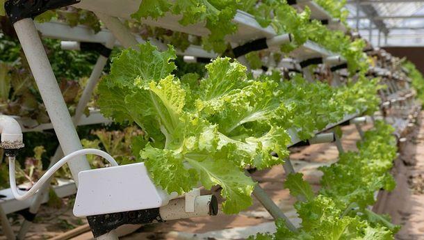 Ini 5 Jenis Sayuran Cepat Panen yang Bisa Ditanam di Rumah