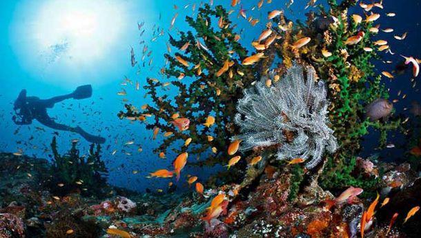 Anda Suka Diving? Yuk, Ke Taman Laut Pantar di Alor - NTT