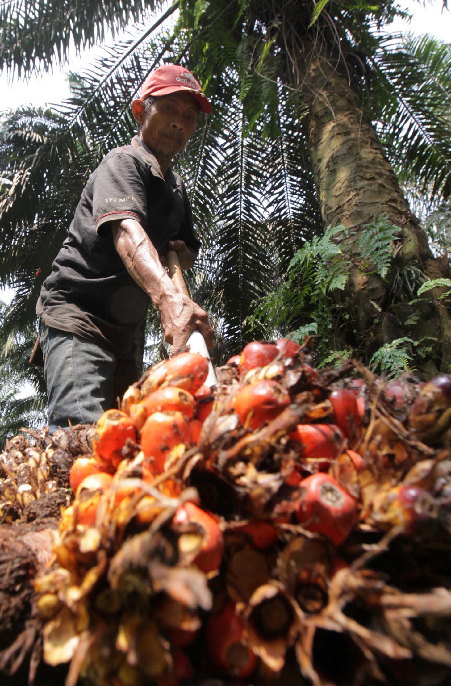 Tumbuh 59 Persen, Ekspor Minyak Kelapa Sawit Sumbang US$2,43 Miliar pada September 2021