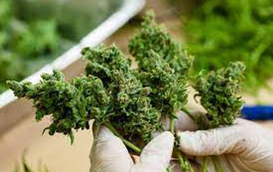 Find Out Why Buying Weed Online Can Be The Best Option