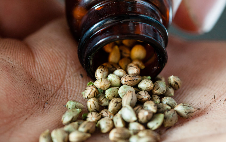 Tips On Buying Marijuana Seeds Safely Online