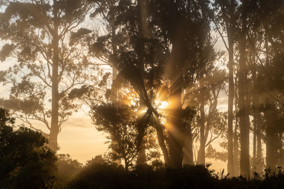 Headlands Sunrise Through Trees