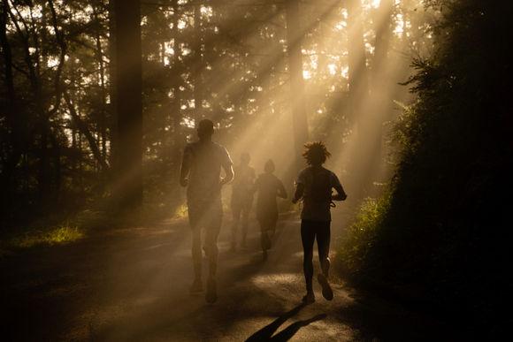 Mt Tam Decent Sun Rays Through Trees Group