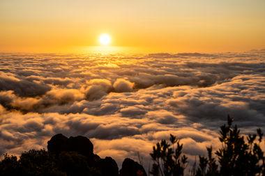 Mt Tam Sunrise Fog