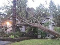 Des Moines Tree Service