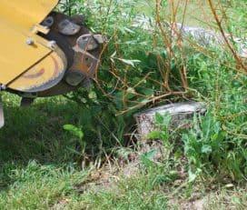 Grapevine Tree Service