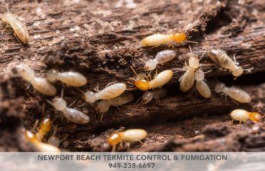 Newport Beach Termite Control & Fumigation