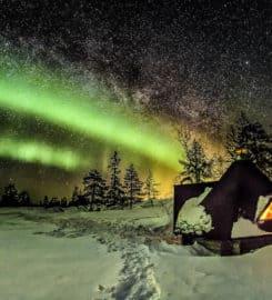 Wild About Lapland