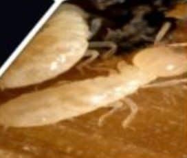 Marlboro Pest Control Experts