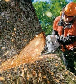 Tree Tech NZ